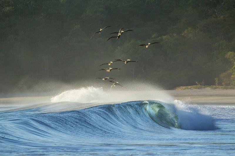Pelican Surfers