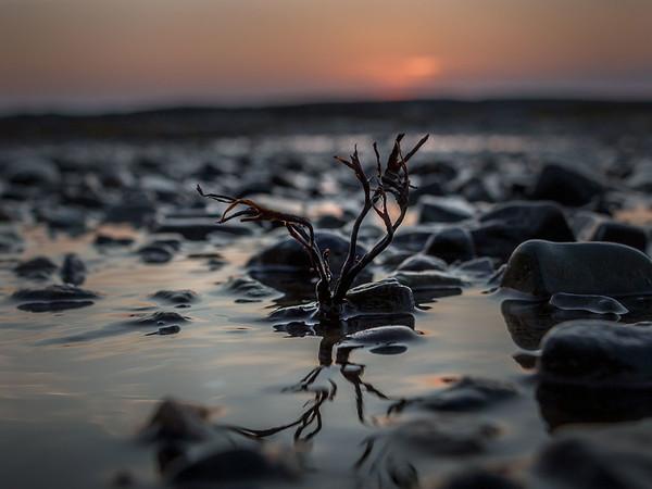 Low tide survivor