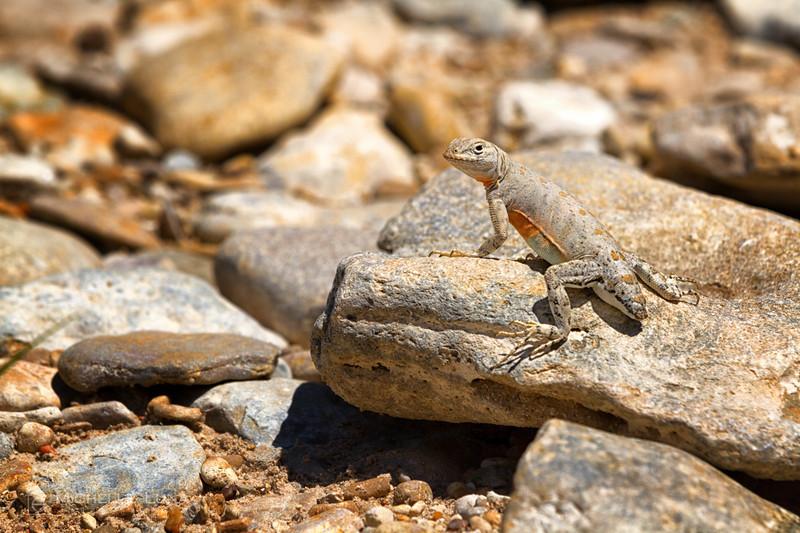 Sunbathing - Dinosaur Valley State Park, Glenrose, TX