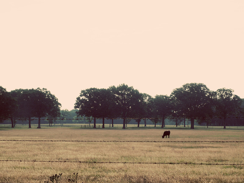 Lone Cow - Lake Fork, Texas  Order Code: A32