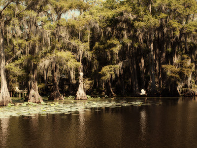 Mysterious Caddo Lake  Order Code: A20