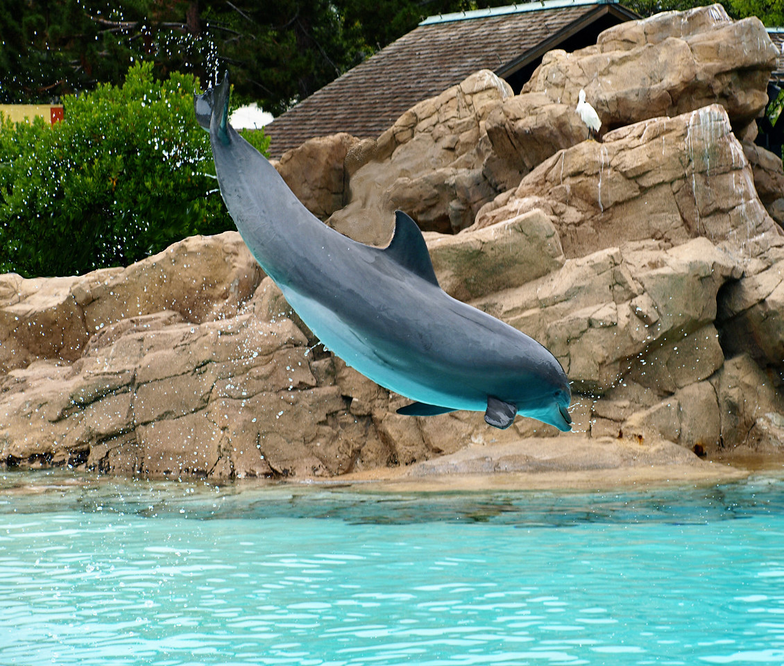 Dolphin - San Diego Zoo  Order Code: B9