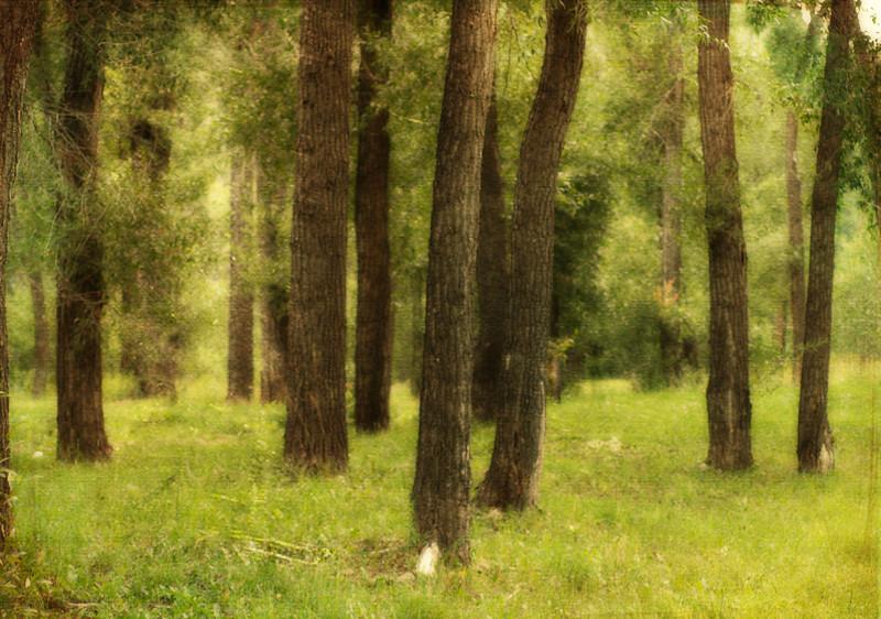 San Juan National Forest  Order Code: C17
