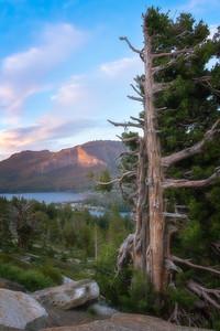 Silver Lake Tree