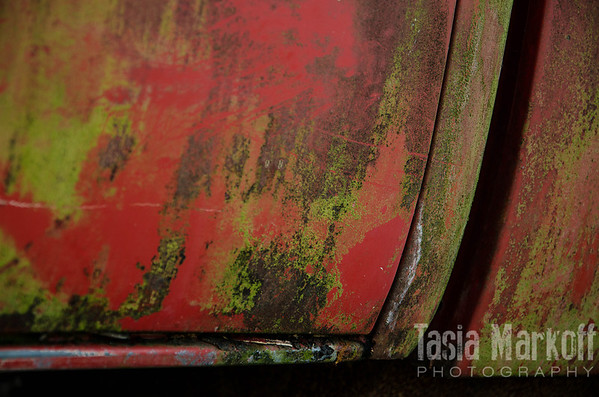 "What is rust, what is paint, what is some kind of mossy growth? All I know is that this old truck door in Yamhill is its own abstract art. <br /> <br /> Metal print with easel base<br /> 8"" x 10""<br /> $68<br /> <br /> 111"