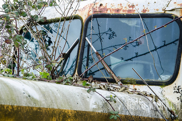 "The windshield wipers probably won't help if anyone ever tries to drive this old truck away. Peeling rust, spreading moss, and thorny vines combine to in the beauty of neglect in Yamhill. <br /> <br /> Metal print with float mount<br /> 8"" x 12""<br /> $70<br /> <br /> 129"