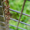 "A rusting chain with a fence that is slowly acquiring a coat of lichen. Metal oxidizes away while nature moves in. Reds and greens in lovely contrast in Gaston. <br /> <br /> Metal print with easel base<br /> 5"" x 7""<br /> $53<br /> <br /> 121b"