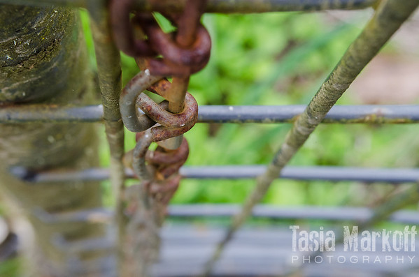 """A rusting chain with a fence that is slowly acquiring a coat of lichen. Metal oxidizes away while nature moves in. Reds and greens in lovely contrast in Gaston. <br /> <br /> Metal print with easel base<br /> 5"""" x 7""""<br /> $53<br /> <br /> 121a"""