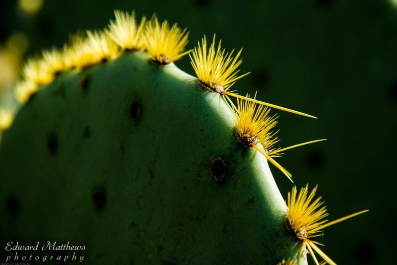 Cactus in Lost maples Park, Texas