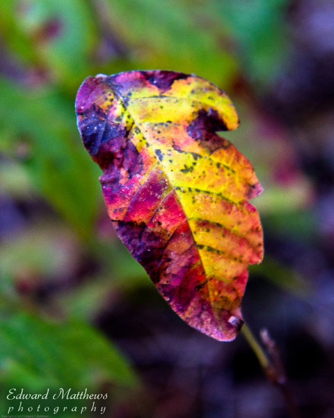 Leaf along trail in Zilker Park