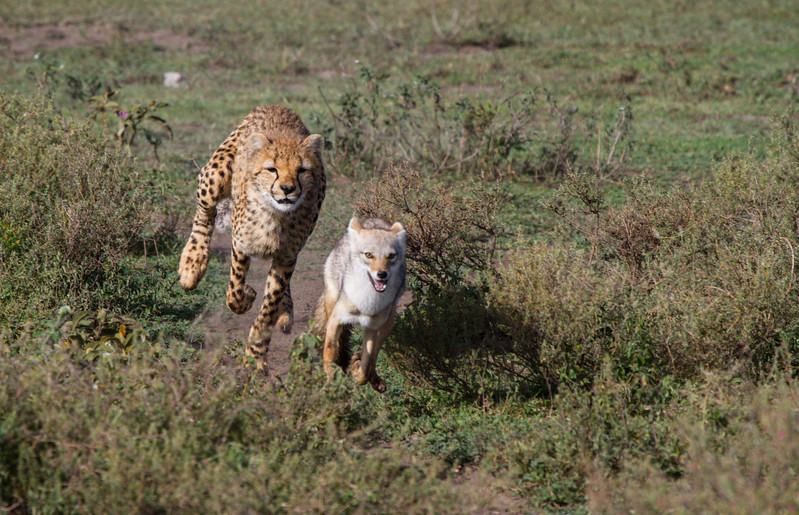 """Run Away!!!"""