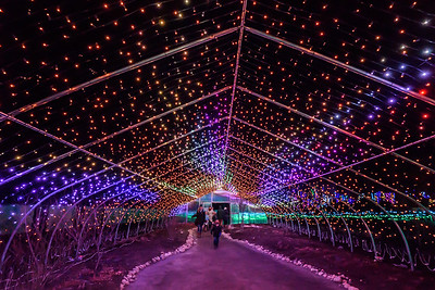 Butterfly House In Lights