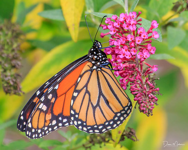 Tulsa_Philbrook_Butterflies_and_Bees-20171006-0012