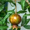 Superfood Pomegranate