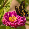 ZInna and butterfly