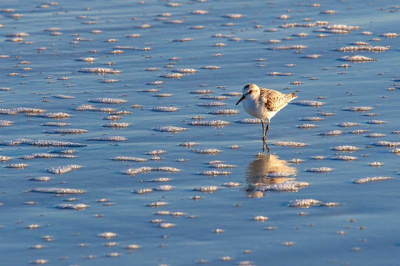Seabird, Sapelo Island