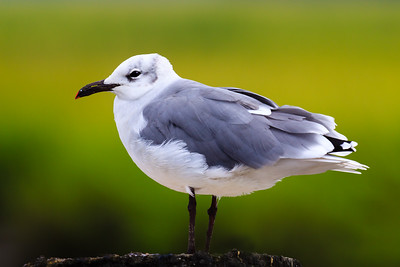 Seagulls on Sapelo Island