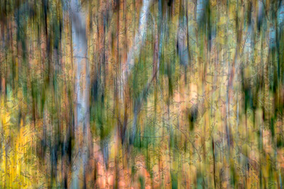 Birch Abstract II
