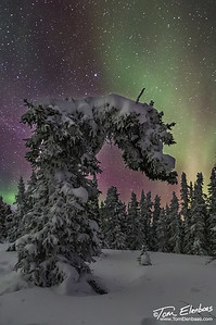 Bowing Before the Goddess Aurora, Wickersham Dome Trailhead, , Alaska
