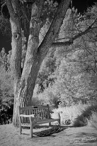 Fullerton Arboretum VIII