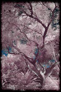 Fullerton Arboretum V