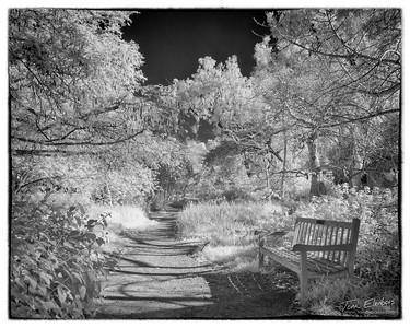 Fullerton Arboretum VII