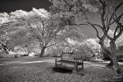 Fullerton Arboretum IV