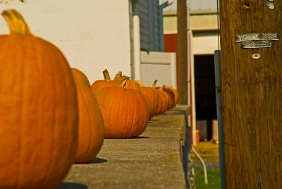 Pumpkin Patch Dauphin County PA
