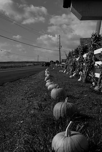 Pumpkin Patch Dauphin County PA