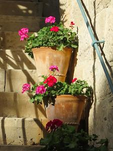 Jordanian Geraniums