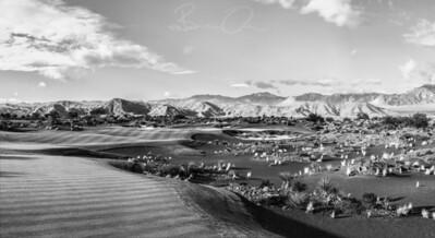 coyote-springs-golf-club-by-brian-oar-15