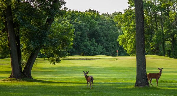 ash-brook-golf-course-2