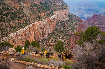 Mule String Starts their Descent on Bright Angel Trail