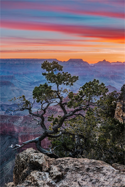 Tree at Sunrise, Yavapai Point, Grand Canyon