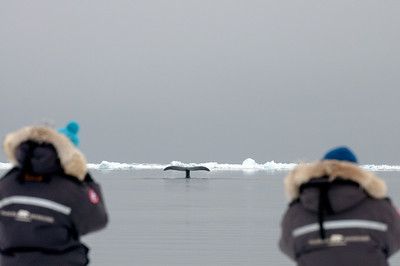 floe edge  adventure tourism  whale watching  polar bear  Polar Sea Adventures  Pond Inlet  Baffin Island  Nunavut