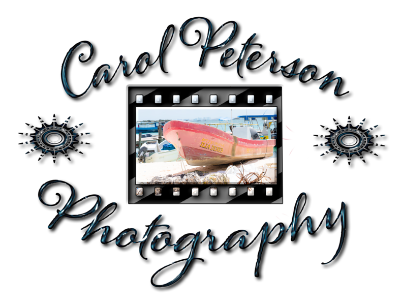 October 24 2017 carol peterson photography logo
