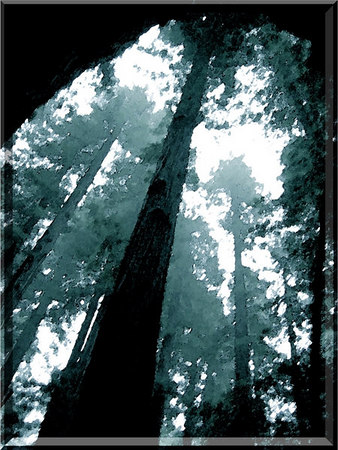 From Within A Tree.  My friend took this picture in Oregon while standing inside of a tree. I performed some digital darkroom modifications to it for an ethereal water color effect.  March 2005
