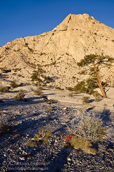 Morning in the Utah west desert, April 2011.