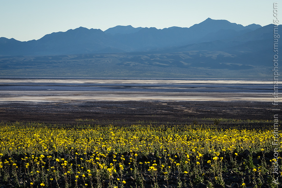 Death valley and environs frishmanphoto desert gold blooms above badwater basin death valley california february 2016 mightylinksfo