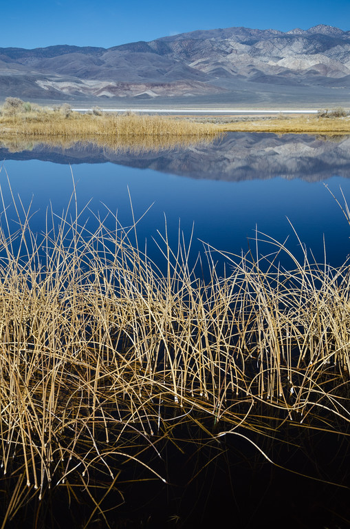 Reflections on spring-fed ponds, Deep Springs Lake
