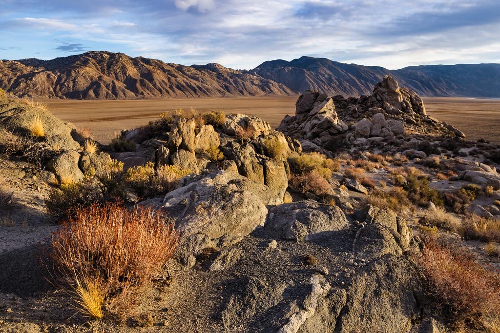Golden light on high desert flora, late fall in Deep Springs Valley