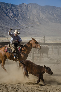 Roping at the annual branding, Deep Springs, California