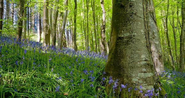 Langdon Forest