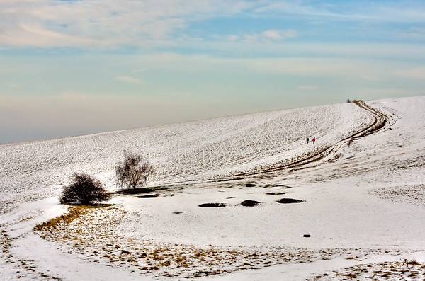 Snowbound Path