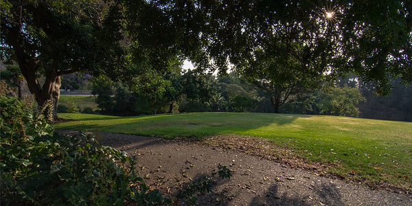 Morning in A Park