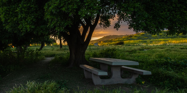 Picnic Table at White Point