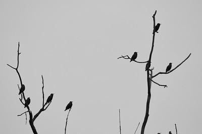 Koogler Wetland & Prairie Reserve, Beavercreek, Ohio  © 2018 Ryan L. Taylor Photography. All Rights Reserved.