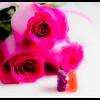 Rose Series: Gummy Smootch
