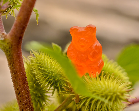 Jungle Gummy