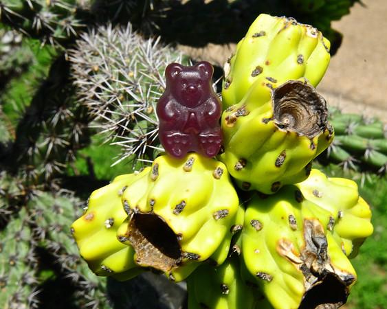 Gummy Cactus
